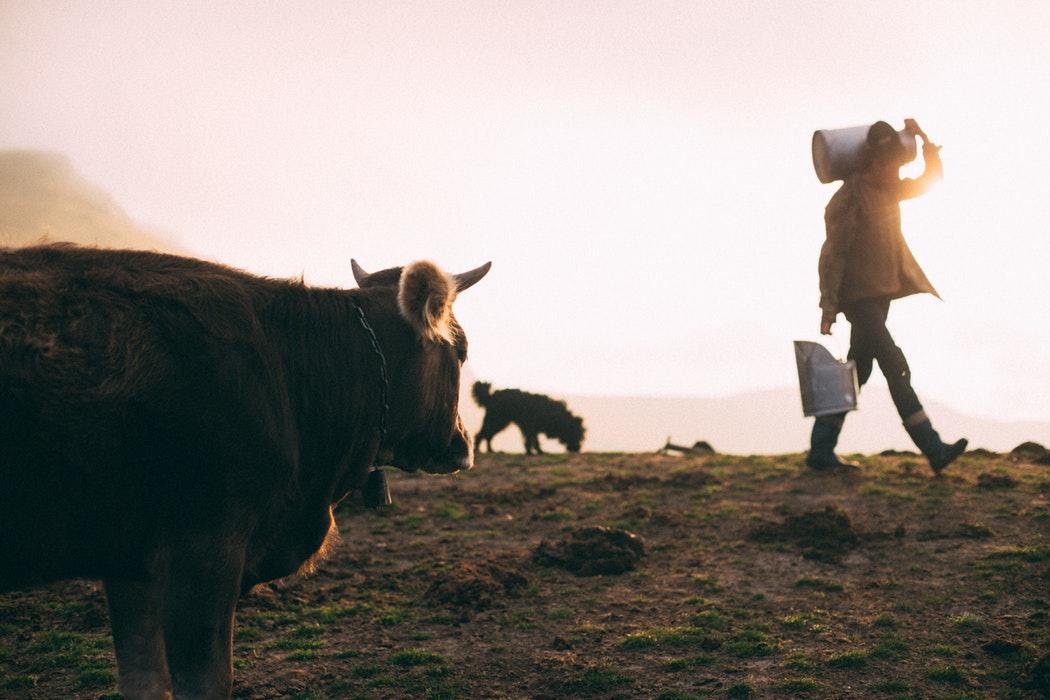 Le lait c'est de la vache, pas du soja !
